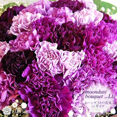 ムーンダストの花束LLサイズ(48本) 花 プレゼント