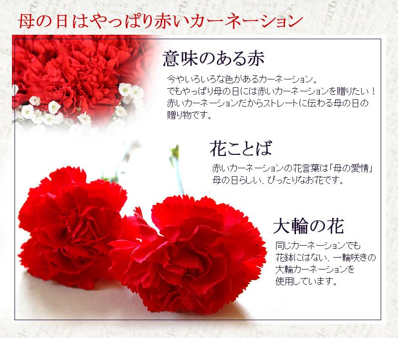 赤いカーネーションのスタンディングブーケ LLサイズ (48本) 母の日